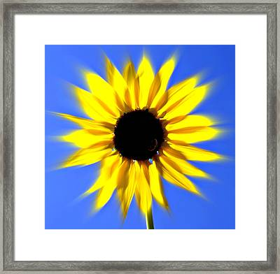 Sunflower Burst Framed Print by Marty Koch