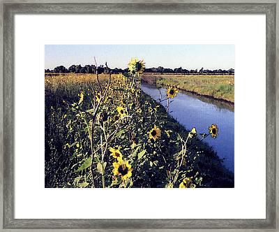 Sunflower Canal Framed Print by Eunice Olson
