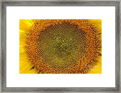 Sunflower Center Framed Print by Darleen Stry