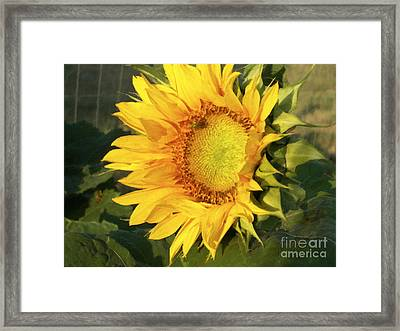 Framed Print featuring the digital art Sunflower Digital Art by Deniece Platt