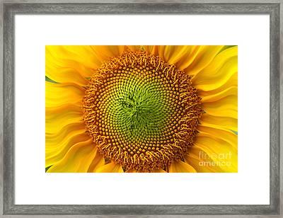 Sunflower Fantasy Framed Print by Benanne Stiens
