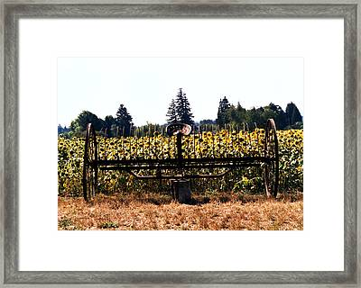 Sunflower Farm Scene Framed Print