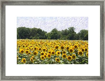 Sunflower Field Framed Print by Donna  Smith