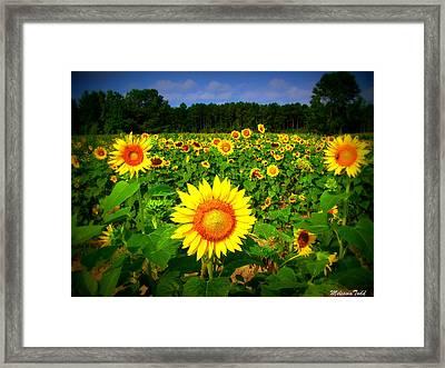 Sunflower Field Framed Print by Melessia  Todd