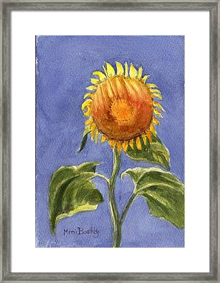 Sunflower Glowing In The Sun Framed Print