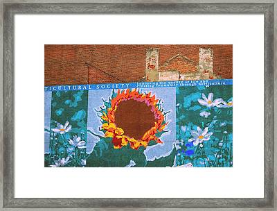 Sunflower In Phili Framed Print by JAMART Photography