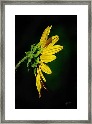 Framed Print featuring the photograph Sunflower In Profile by Vicki Pelham