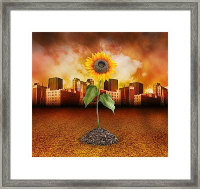 Sunflower In Red City Framed Print by Angela Waye