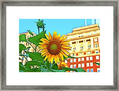 Framed Print featuring the photograph Sunflower In The City by Alice Gipson