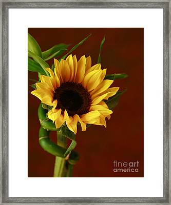 Sunflower  Framed Print by Inspired Nature Photography Fine Art Photography