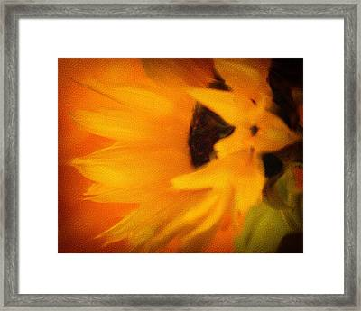 Framed Print featuring the photograph Sunflower by James Bethanis