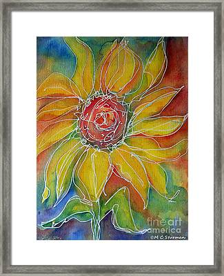 Sunflower Framed Print by M C Sturman