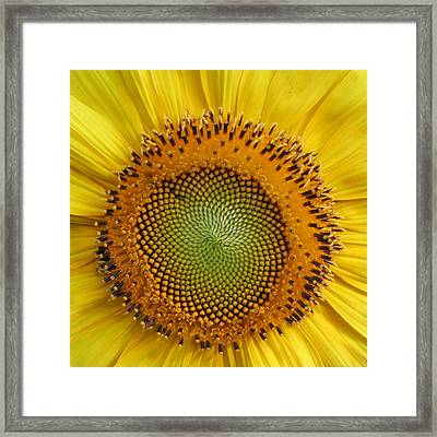 Framed Print featuring the photograph Sunflower Magic by Lou Belcher