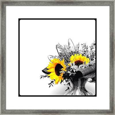 Sunflower Framed Print by Mark B