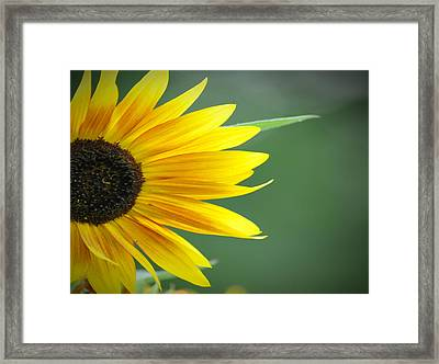Sunflower Morning Framed Print by Bill Cannon