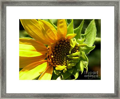 Sunflower No. 2 Framed Print by Christine Belt