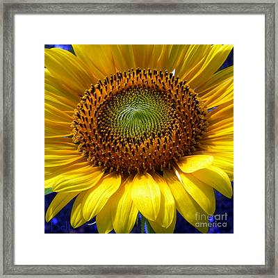 Sunflower No.22 Framed Print by Christine Belt