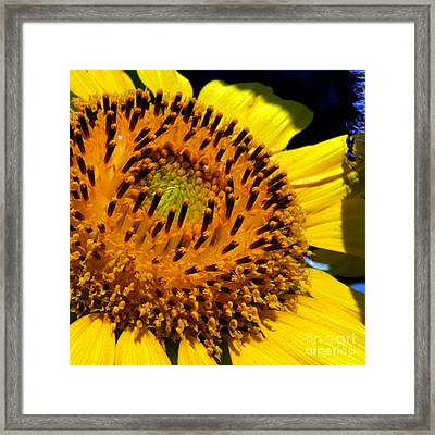 Sunflower No.23 Framed Print by Christine Belt