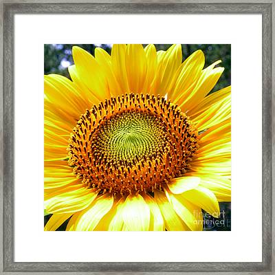 Sunflower No.26 Framed Print by Christine Belt