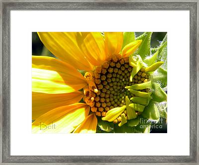 Sunflower No.3 Framed Print by Christine Belt
