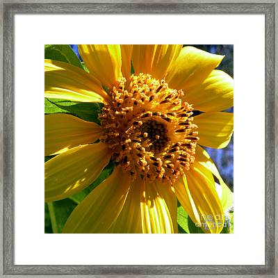 Sunflower No.36 Framed Print by Christine Belt