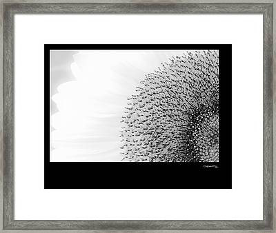 Sunflower On White Framed Print by Xoanxo Cespon