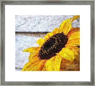 Sunflower Paint Framed Print by Slavi Begov