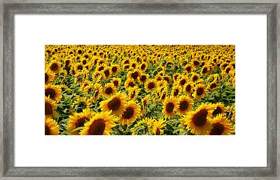 Framed Print featuring the photograph Sunflower Panorama by Nancy De Flon