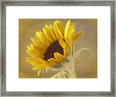Sunflower Framed Print by Fiona Messenger