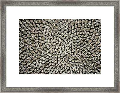 Sunflower Seed Head Framed Print by Dr Jeremy Burgess