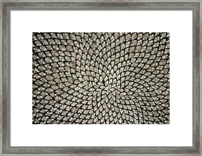 Sunflower Seed Head Framed Print