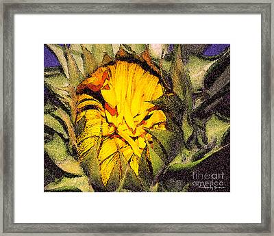 Sunflower Slumber Framed Print