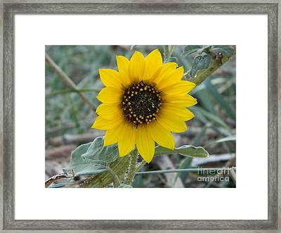Sunflower Smile Framed Print by Sara  Mayer