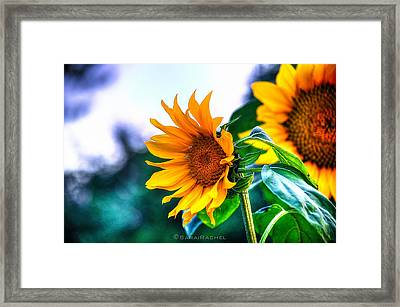 Sunflower Smile Framed Print by Sarai Rachel