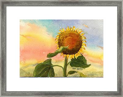 Sunflower Sunset Framed Print