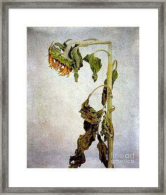 Sunflower Textured Framed Print by Bernard Jaubert