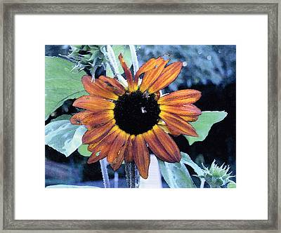 Sunflower With Bee Framed Print by Eunice Olson