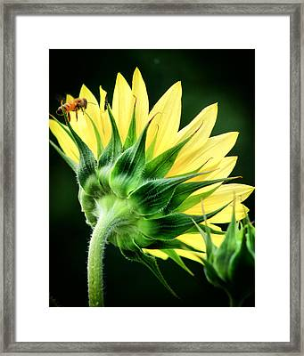 Framed Print featuring the photograph Sunflower With Bee by Lynne Jenkins