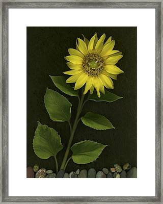 Sunflower With Rocks Framed Print by Deddeda