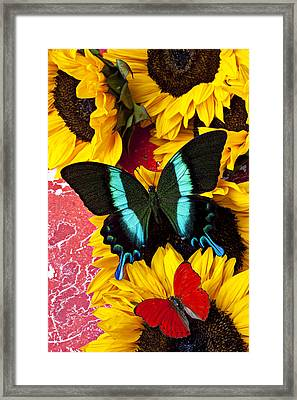 Sunflowers And Butterflies Framed Print by Garry Gay