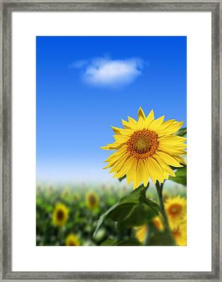Sunflowers, Artwork Framed Print by Victor Habbick Visions