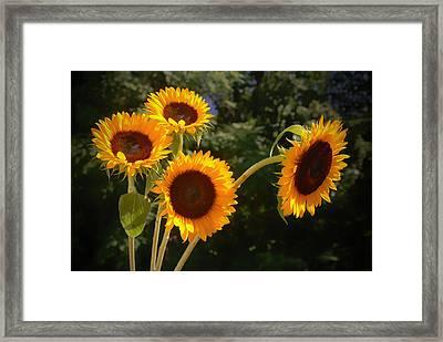 Sunflowers Framed Print by Boyd Alexander