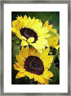 Sunflowers Framed Print by Cathie Tyler