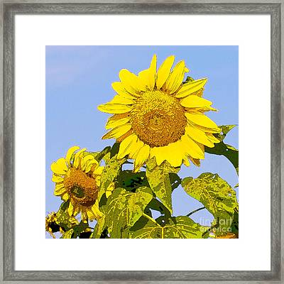Sunflowers In Morning Framed Print by Artist and Photographer Laura Wrede