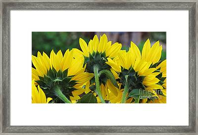 Framed Print featuring the photograph Sunflowers  by Michele Penner