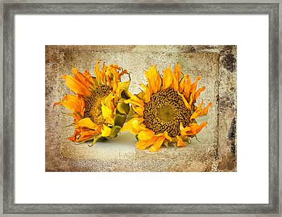 Sunflowers No 413 Framed Print by James Bethanis
