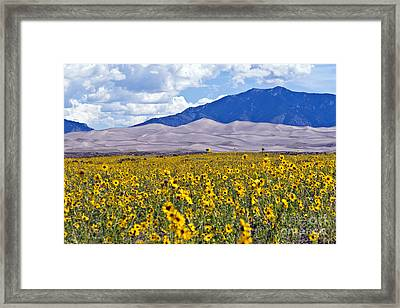 Sunflowers On The Great Sand Dunes Framed Print
