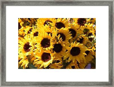 Sunflowers Framed Print by Paulette Thomas
