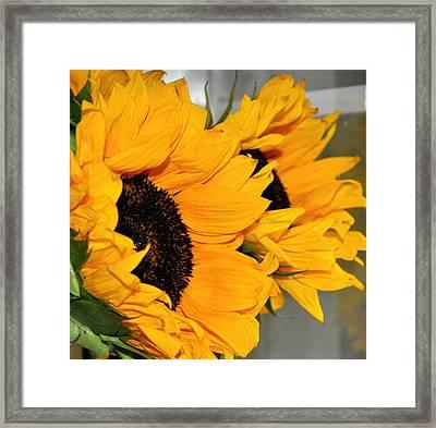 Sunflowers Shine Framed Print by Denise Warsalla