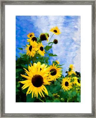 Sunflowers Framed Print by Steve Zimic